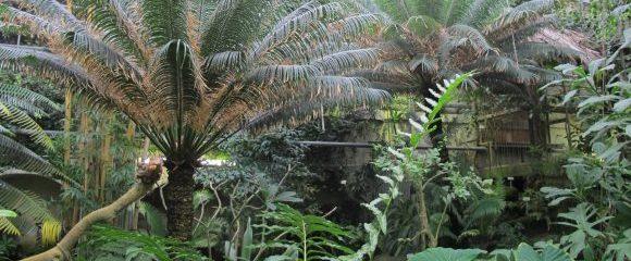 Münster: Botanische Weltreise