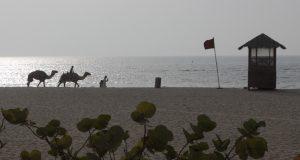 Dubai Strand Kamele