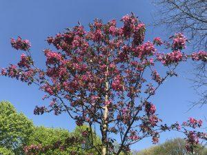 Ostern zu Hause Frühlingsblüten